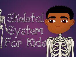 10 video YouTube nhất định phải xem khi học về hệ xương (Ảnh: YouTube)