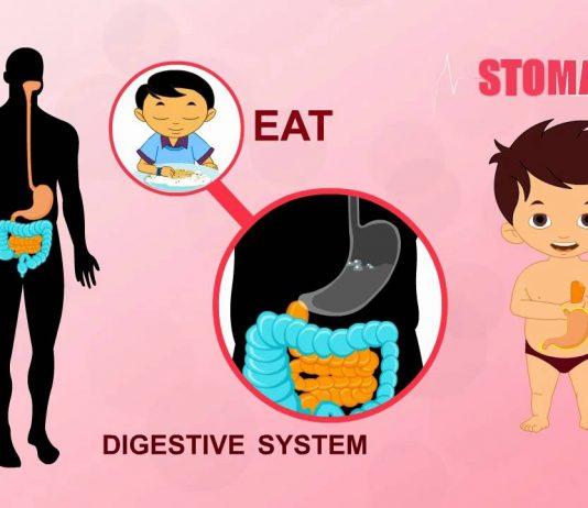 8 video YouTube giúp trẻ học về hệ tiêu hoá (Ảnh: Anatomy Of Diagram)