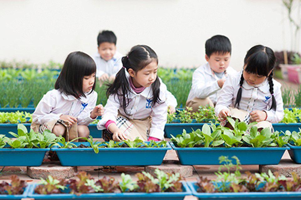 Vườn rau học tập của học sinh CGD Victory