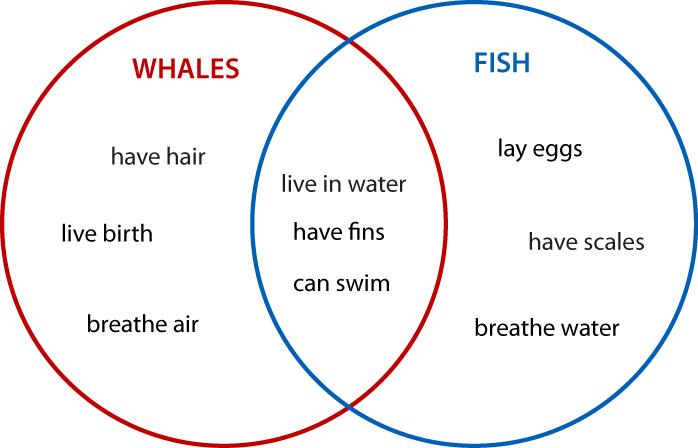 Biểu đồ Venna so sánh giữa cá heo và cá (Ảnh: Mathematica Stack Exchange)