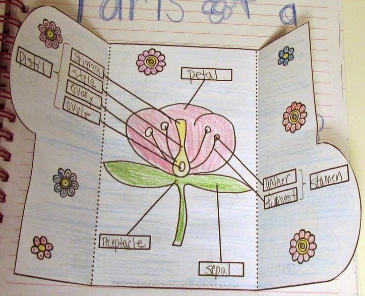 Interactive notebook: vở ghi chép tương tác, khuyến khích trẻ trẻ sáng tạo và khơi gợi hứng thú học tập (Ảnh:asaiyutuiblog)